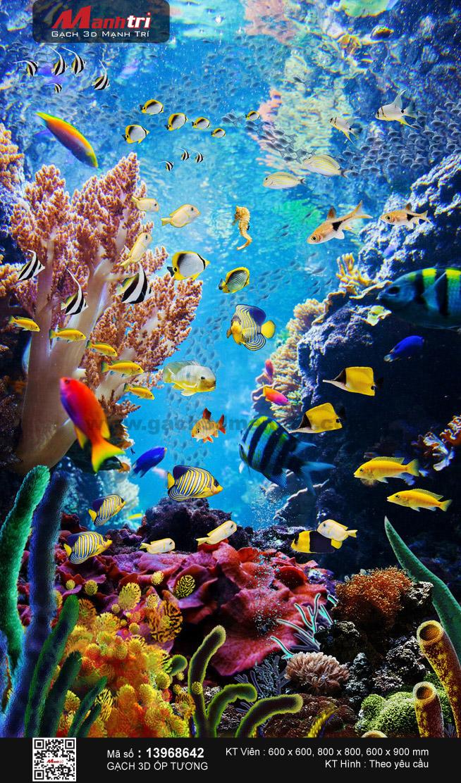 Dải san hô rực rỡ