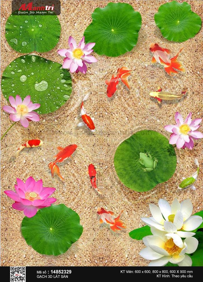 Cá chép trong hồ sen nền cát vàng