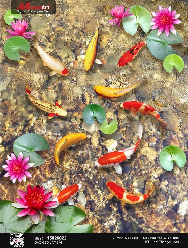 Cá chép cùng hoa sen khoe sắc