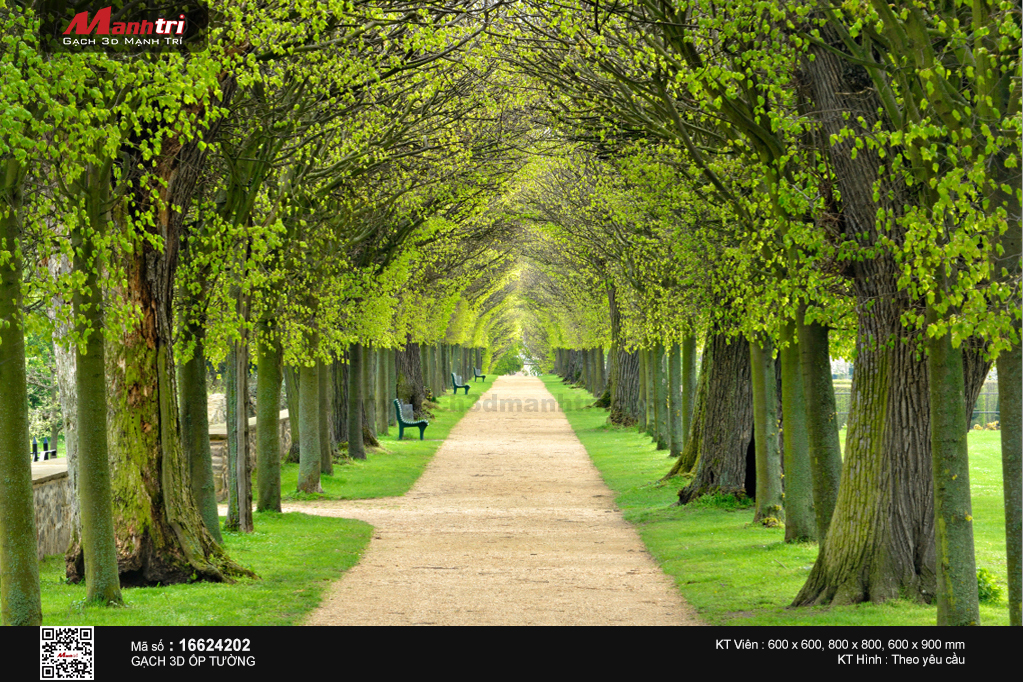 Hai hàng cây thẳng tắp