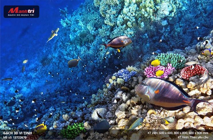 Những sinh vật nhỏ bé dưới đáy biển