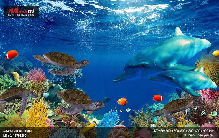 Cá heo cùng rùa biển bên dải san hô
