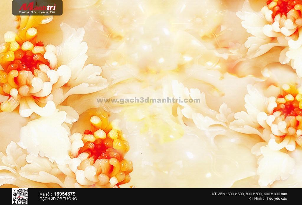 Hoa cúc vàng nở rộ